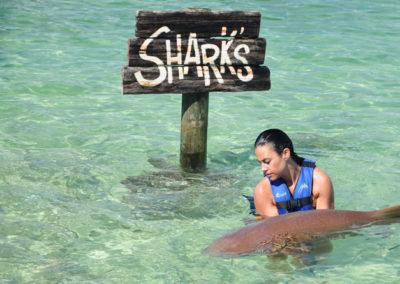 slider_sharksrays01